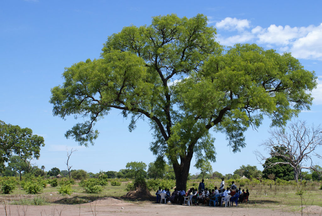 Lessons under trees in South Sudan